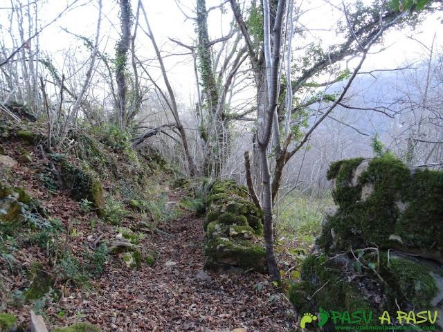 Sendero a Fabar entre bosque