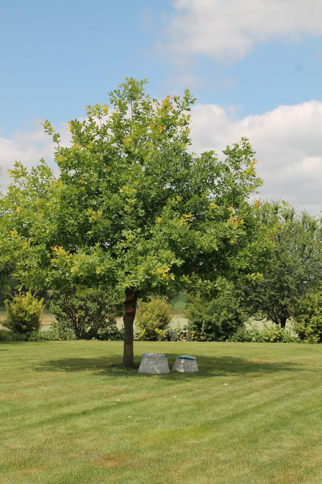 Wie Plane Ich Meinen Garten mein lieblingsbaum im garten