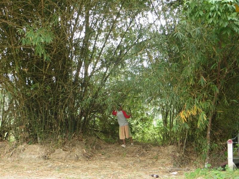 Бамбук, тайский парень