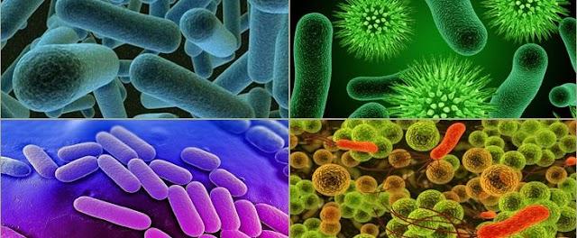 7 Bakteri dalam Makanan yang Membuat Anda Sakit