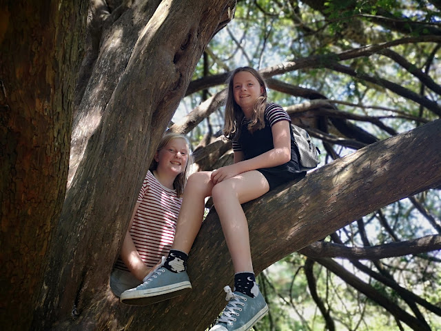 twin girls in a tree
