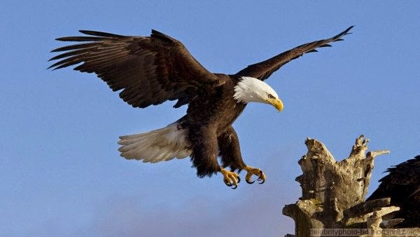 Latest Beautiful Animals High Quality HD Wallpaper Collection 2014