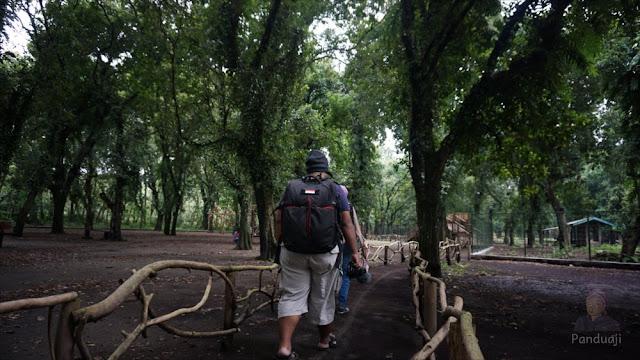 foto kesambi trees park