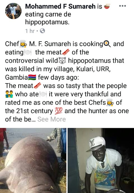 """Human right before animal right""- Gambian man declares as he and friends heartily enjoy meat of Hippopotamus killed in their village"