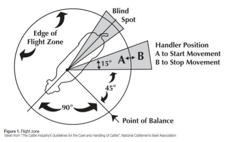 Blind Spots Vision