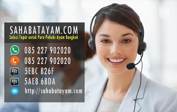 Beli Alat Latih, Obat, dan Jamu Ayam? Sahabatayam.com Rekomendasi Saya!