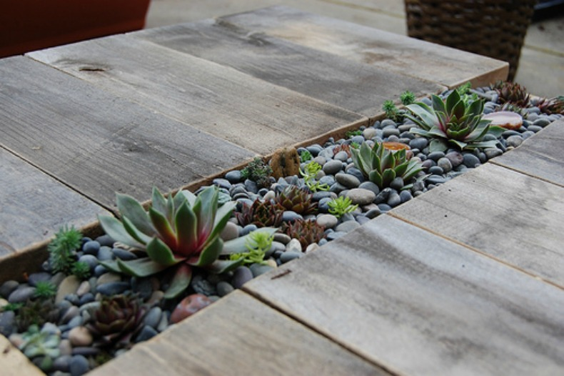 Coastal table top succulent planter DIY