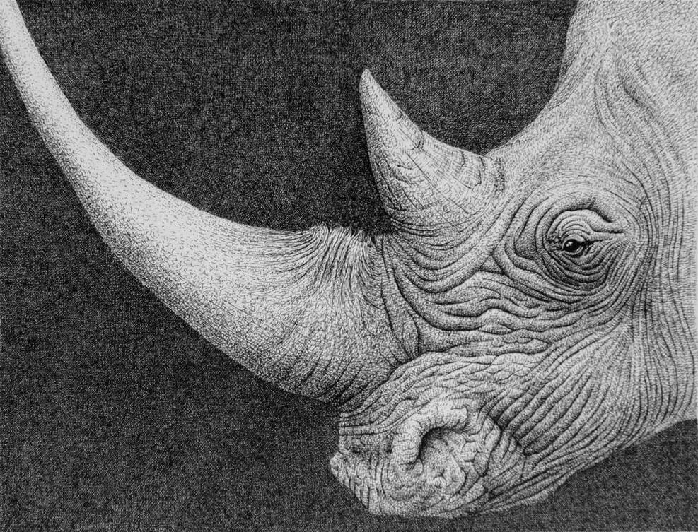 10-Rhino-Rens-Ink-Animal-Wildlife-Pen-and-Ink-Stippling-Drawings