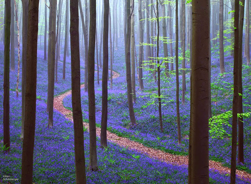 6. Hallerbos, Belgium - 22 Mysterious Forests I'd Love To Get Lost In