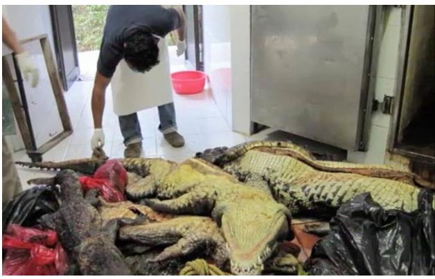Animales mueren o desaparecen en ZooMAT