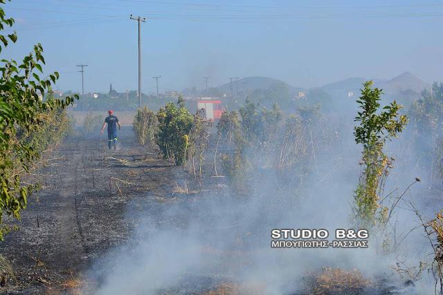 Αργολίδα: Πυρκαγιά στην Πουλακίδα