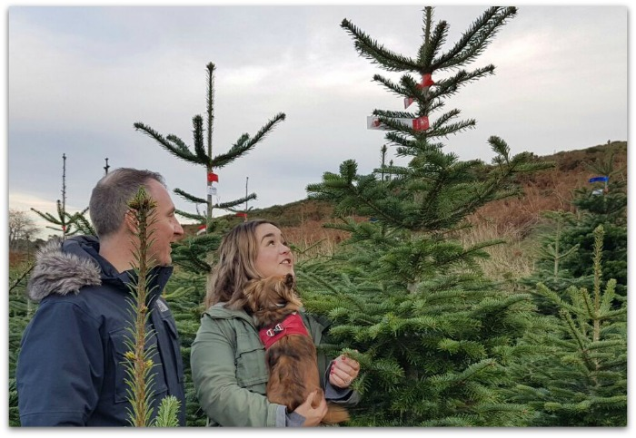 Christmas Tree shopping at Wicklow Way Christmas Tree Farm
