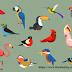 पारिस्थितिकीय तंत्र के लिये अन्य महत्त्वपूर्ण प्रजातियाँ (Other Important Species for Ecosystem) |