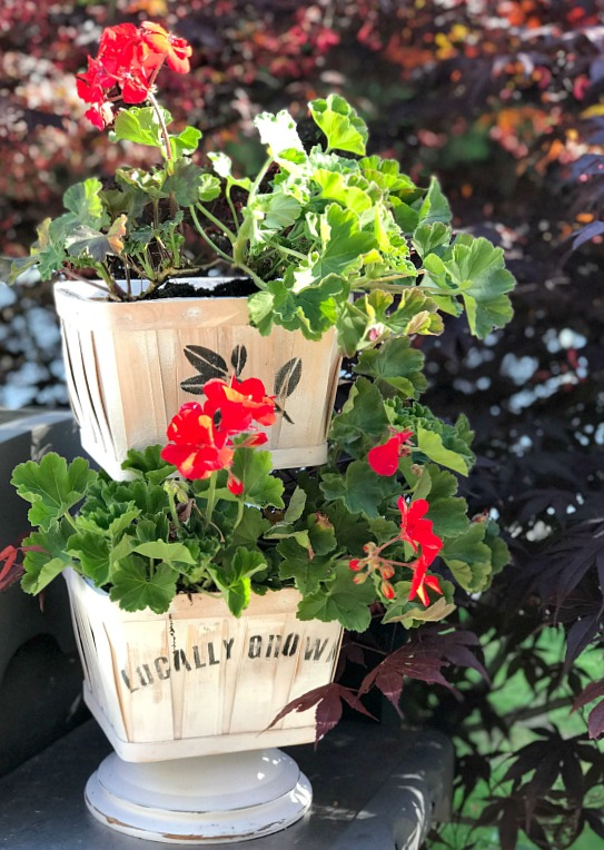 Tiered Tray Basket Planter for Geraniums.