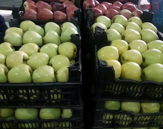 مزارعو التفاح في السويداء بين مطرقة التعويض وسندان التصريف.؟