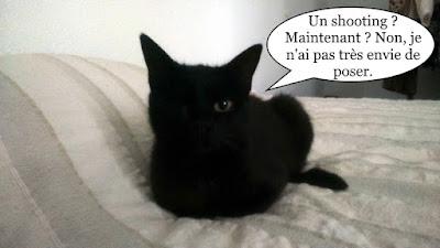 Chatte noire borgne