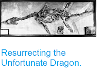 http://sciencythoughts.blogspot.co.uk/2015/04/resurrecting-unfortunate-dragon.html