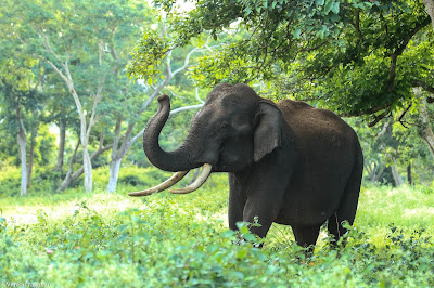 10 Lines about elephant in Hindi
