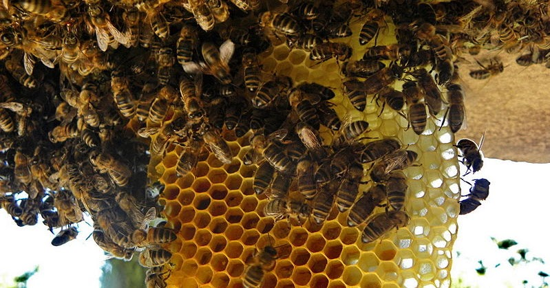 Eco Bee Removal: Bee R...