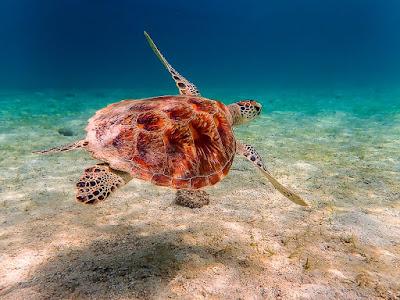 Tortue-snorkeling-Port-Barton-Philippines