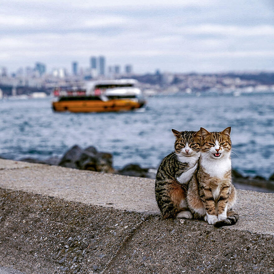Photographer Captured Two Stray Cats Cuddling With His Camera And They Are Adorable
