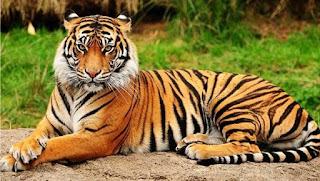 Contoh Descriptive Text about animal dalam bahasa inggris dan artinya Contoh Descriptive Text about animal dalam bahasa inggris dan artinya