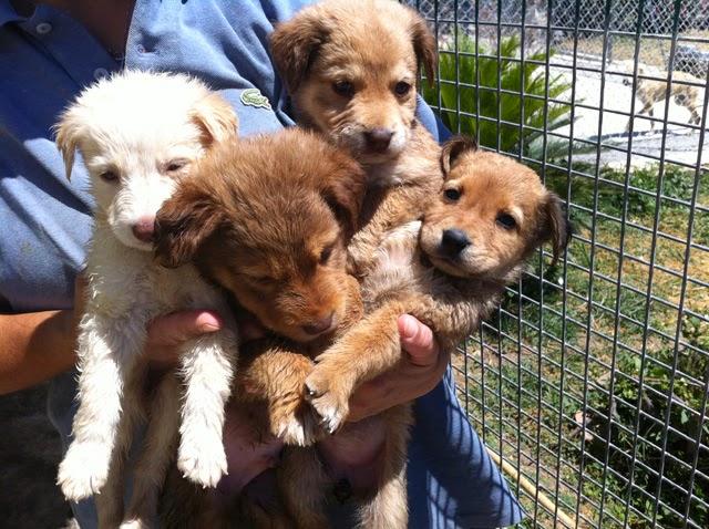 foto cani di piccola taglia da appartamento