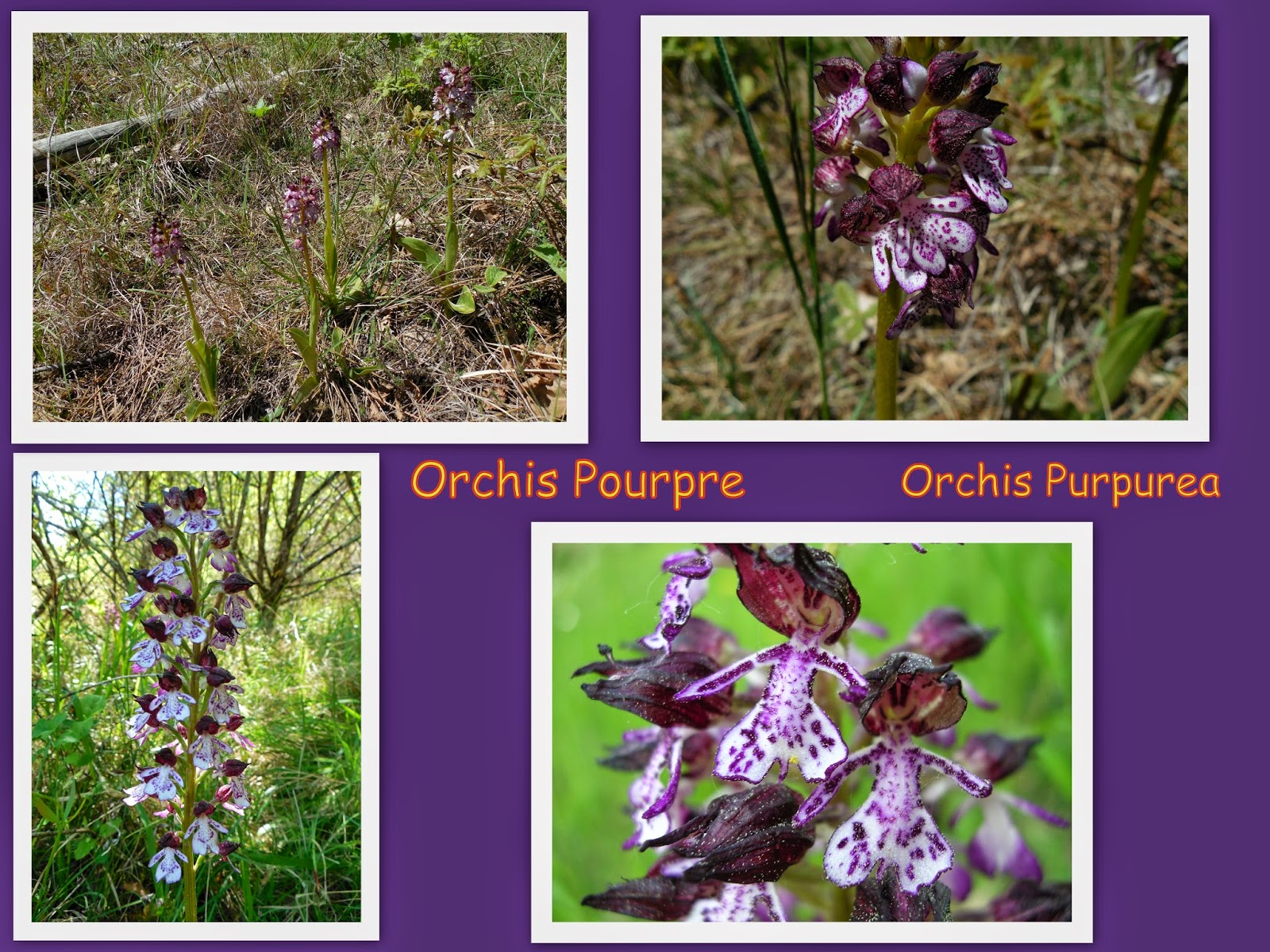 soyez les bienvenus sur randomilpas: les orchidées