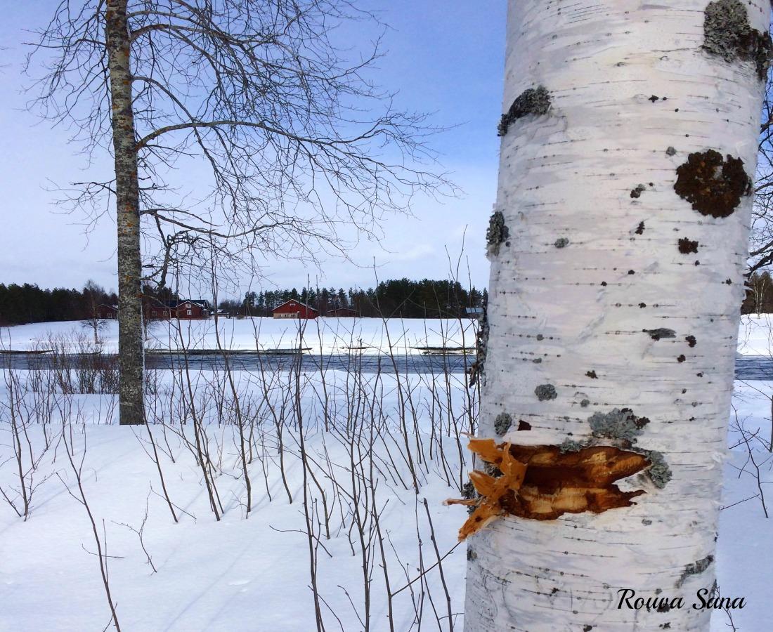 Pudasjärvi
