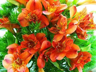 Bunga Freesia merah