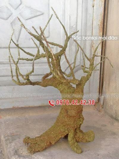 Goc bonsai  mai dao tai Duy Tan