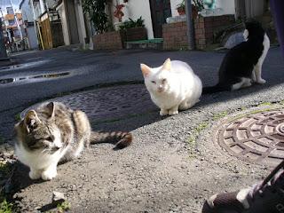 雨あがりの路地裏猫たち キジトラ・白・白黒猫の並び