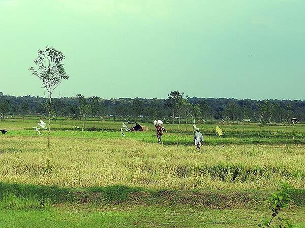 Tanah Pertanian di Minahasa