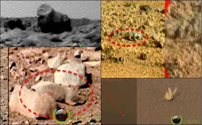 4 Hewan Hidup di Planet Mars yang berhasil diabadikan oleh Curiosity