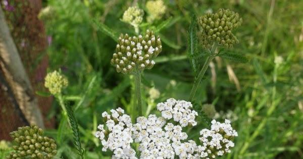 Il nome dei fiori bianchi - Fiori a campanella rossi ...