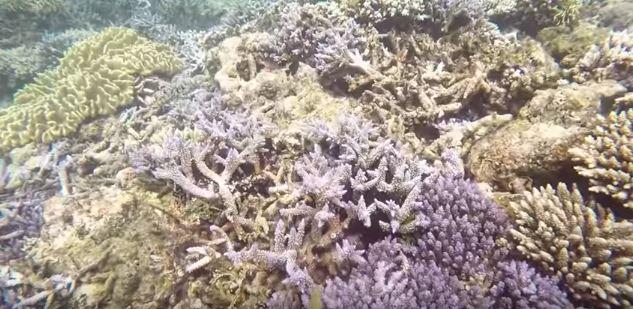 terumbu karang di di teluk kiluan lampung