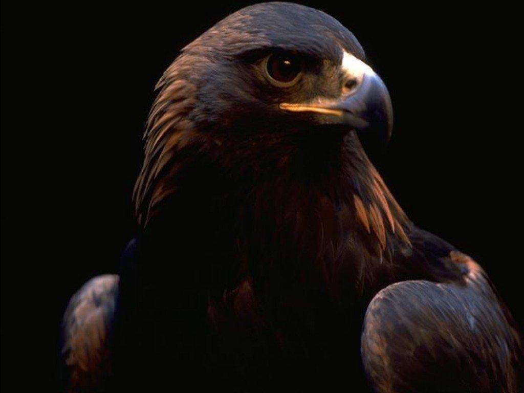 Wallpapers - HD Desktop Wallpapers Free Online: Bird ...