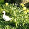 http://gartendeko-blog.blogspot.de/2013/02/osterinsel-im-rasen.html