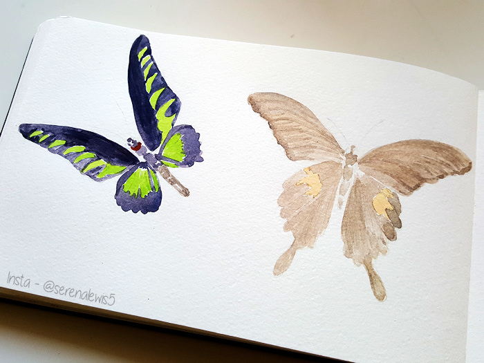a work in progress sketch of two butterflies