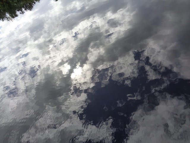 Clouds and palm tree reflected on water in South Florida