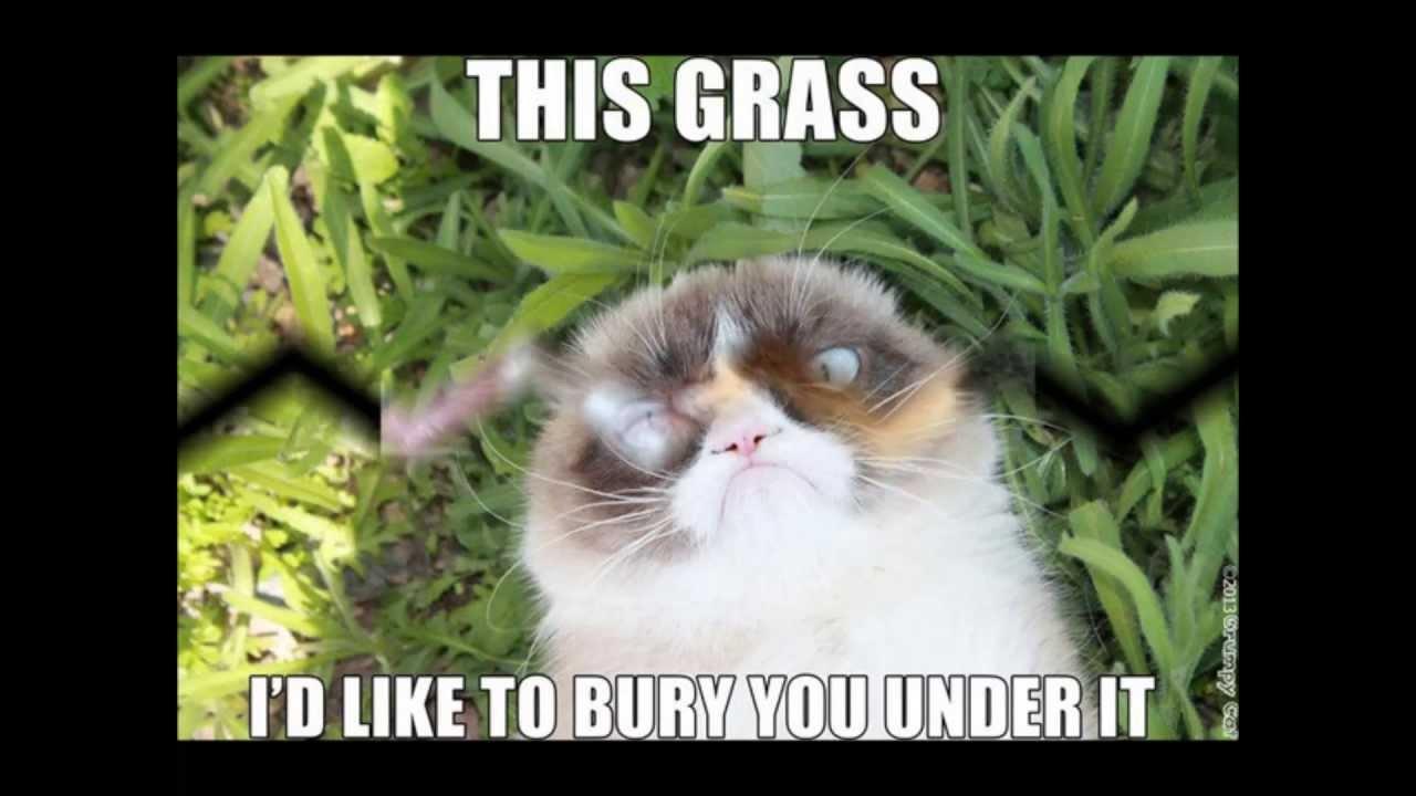 Funny Cat Birthday Meme : Cat lover