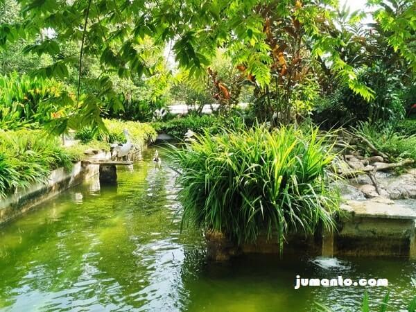 foto burung pelikan taman satwa lembah hijau