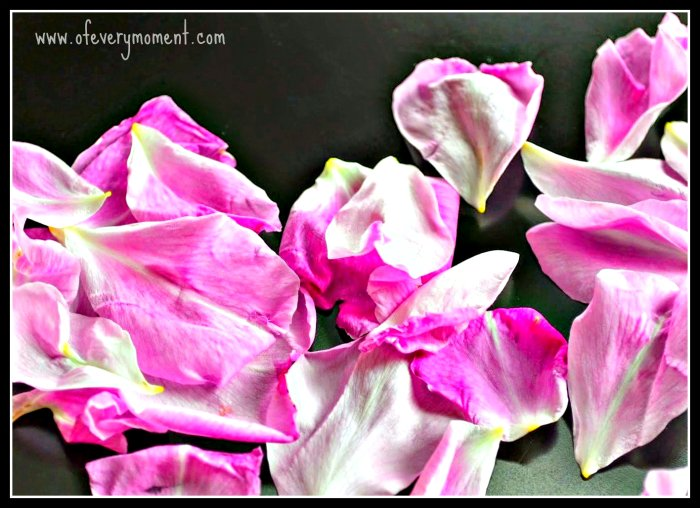 Rose petals, Words for Wednesday word prompt fiction