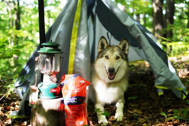 camping wolfdog