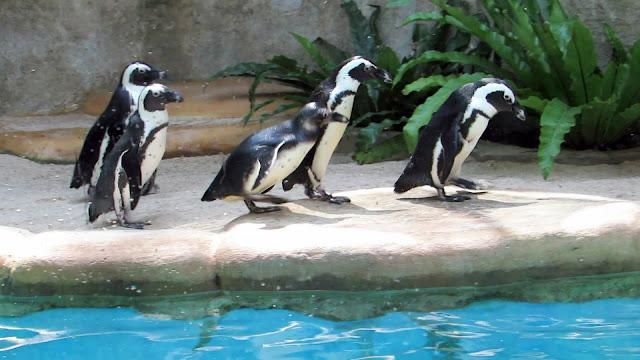 7 Tempat Wisata Yogyakarta Terbaik Paling Josss-Kebun Binatang Gembira loka