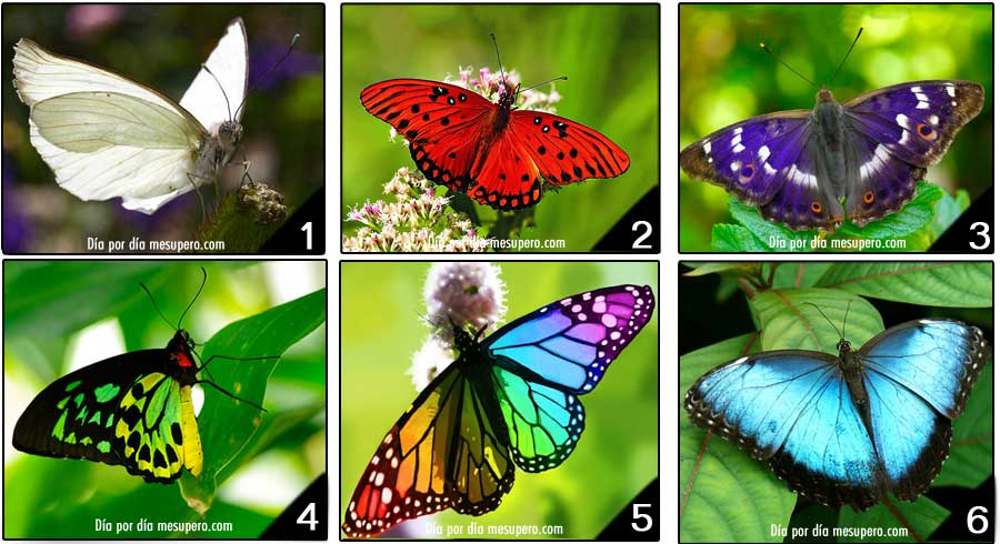 Test divertido: La mariposa que escoges revela tu  personalidad