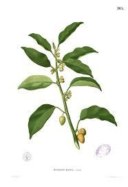 Klasifikasi dan Ciri Tumbuhan Berbiji (Spermatophyta)