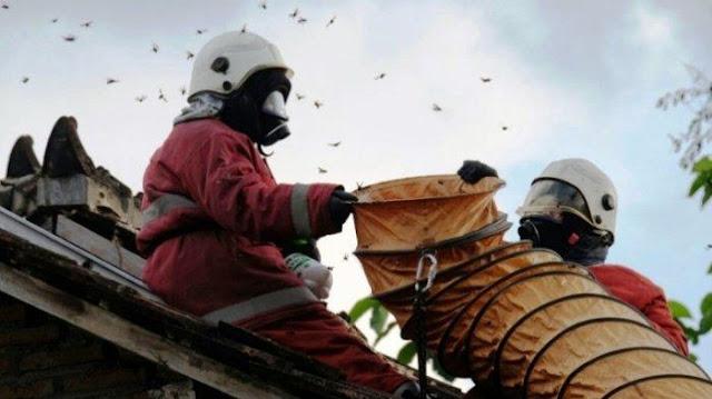 Lebih Bahaya Dari Ular, Tawon Ini Sebabkan 7 Orang Meninggal di Klaten