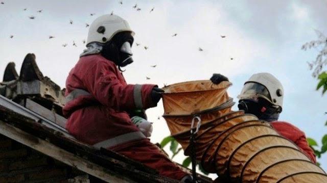 Lebih Ancaman Dari Ular, Tawon Ini Sebabkan 7 Orang Meninggal Di Klaten