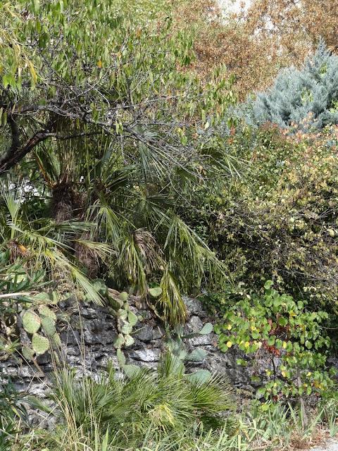 (07) Le jardin de Bésignoles - Privas - Page 4 DSC00212